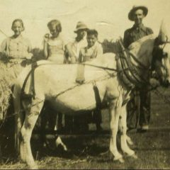 Three Mules and a Jack